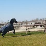 anxious-horse-paddock